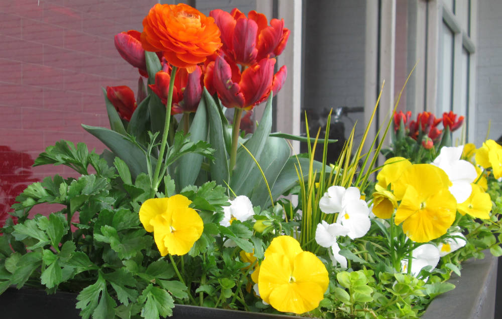 spring-container-5