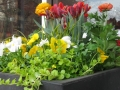 spring-container-4
