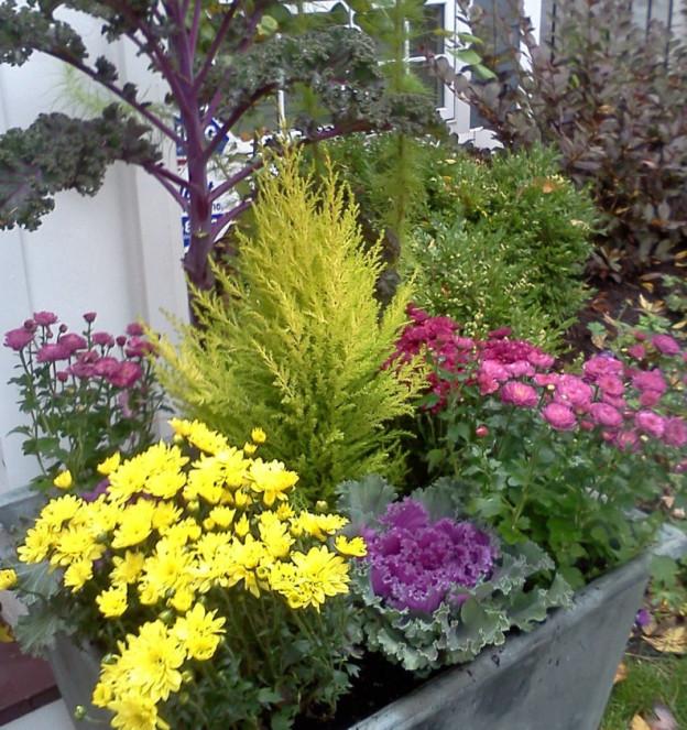 Winter Planter 6